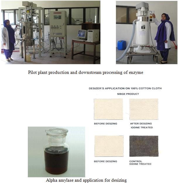 research paper on amylase production